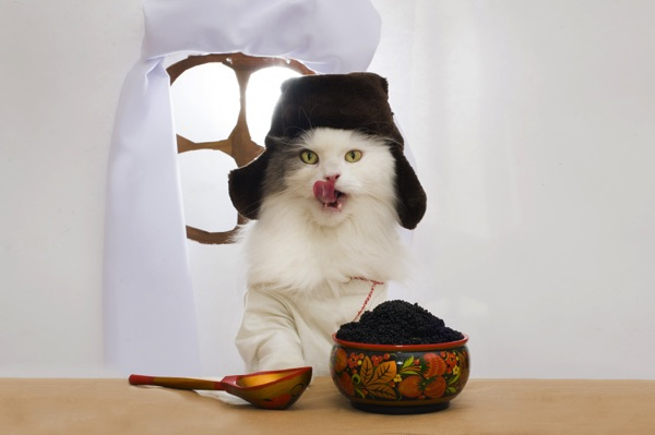 a cat eating black caviar