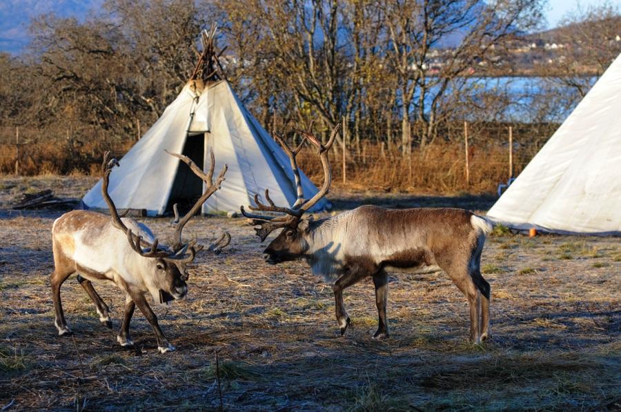 DAY 3 - Sami village visit